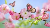 Stunning-Spring