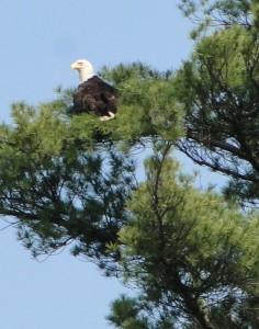 img-eagle