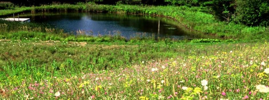 slider-pond